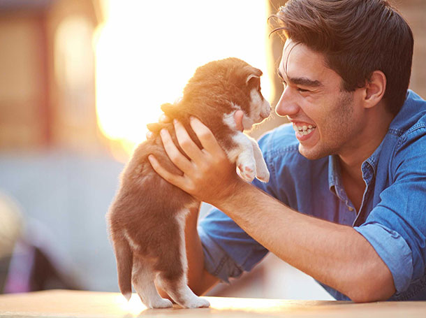 How to find a good pet relocation service